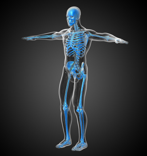 human skeleton, bone health, build strong bones, nutrients to help build strong bones
